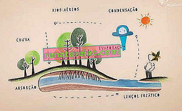 Анимацията показва значението на запазването на водния цикъл за обществото