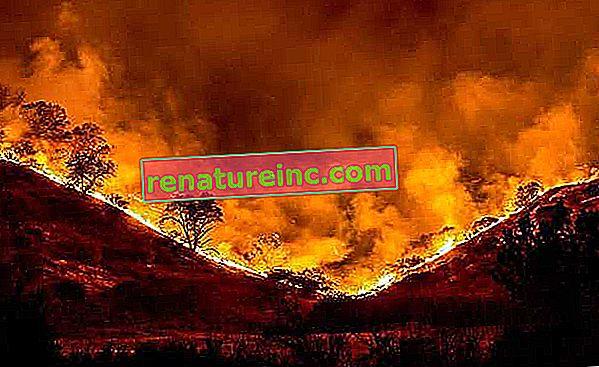 Zaskrbljen zaradi požara, Guterres pravi, da je