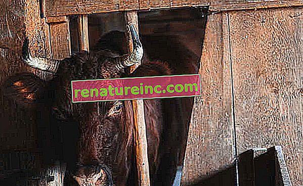 Forstå produksjonen av fôrkjøtt