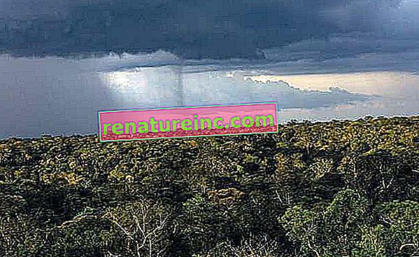Odlesňovanie tropických lesov ovplyvňuje zrážky na celom svete