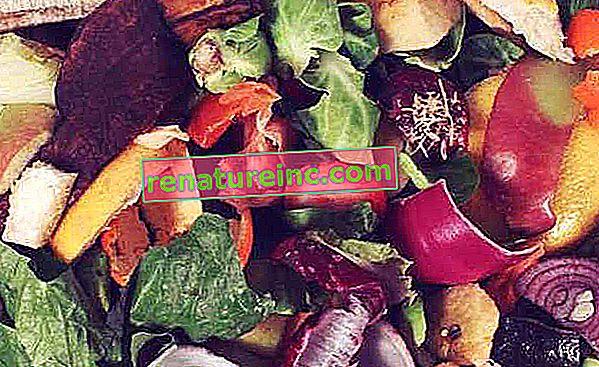 Какво представляват органичните отпадъци и как да ги рециклираме у дома