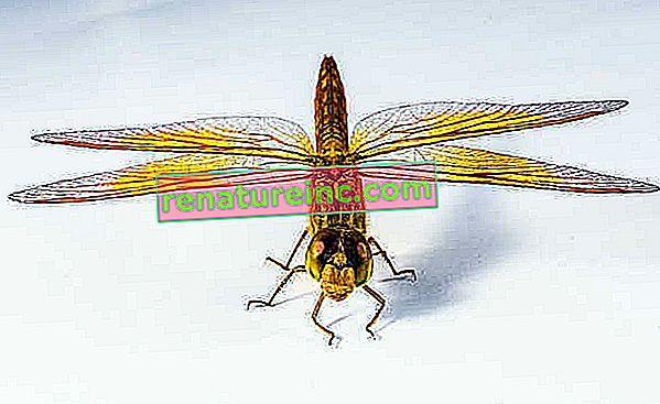 Прототипните вятърни турбини, вдъхновени от крила на насекоми, са с 35% по-ефективни
