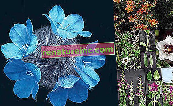 Книгата с безплатен достъп включва зашеметяващи растения от Cerrado
