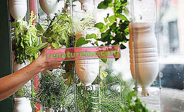 Windowfarm: haga un huerto en la ventana de su casa