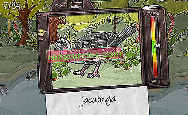 Atlantic Forest es un tema de juego educativo para Facebook