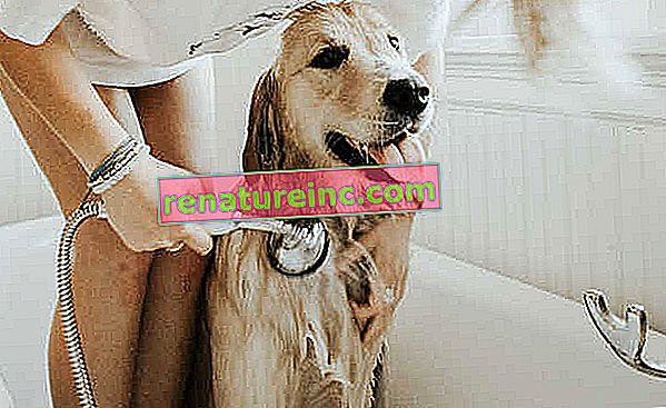 Vse, kar morate vedeti o higieni hišnih ljubljenčkov v novi pandemiji koronavirusa