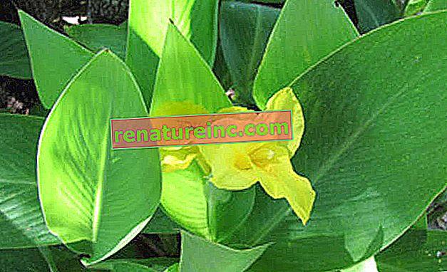 Грижа за растенията в помощ на околната среда