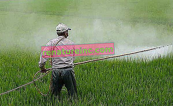 Glyphosate: un herbicide largement utilisé peut provoquer des maladies mortelles
