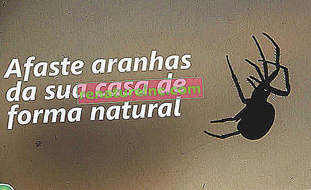 Siete tipos de repelentes naturales para arañas