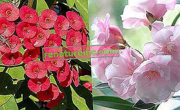 Conoce plantas venenosas comunes en los jardines