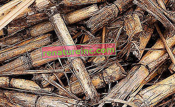 ¿Qué es la biomasa? Conoce ventajas y desventajas