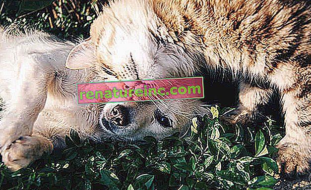Veinte alimentos y sustancias prohibidas para perros y gatos