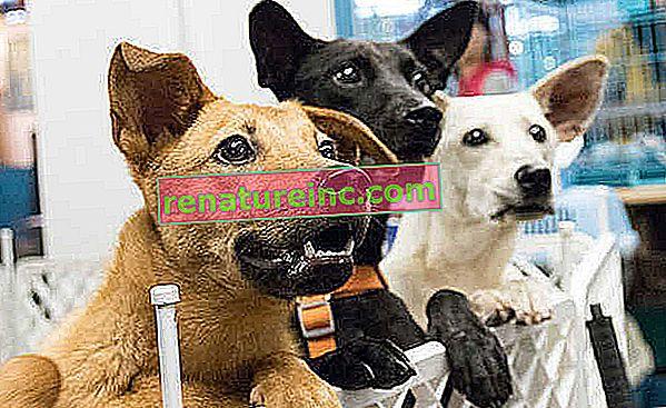 Wskazówki dotyczące adopcji zwierząt