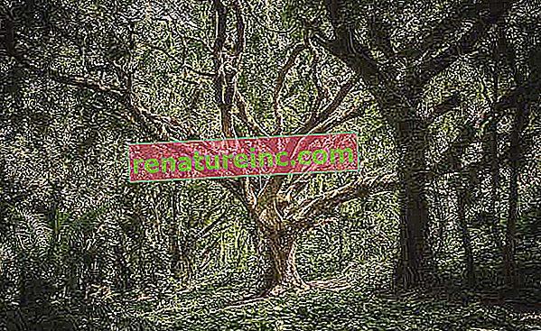 יתרונות העצים וערכם