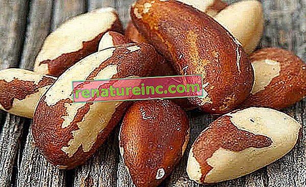 Brazilski orašasti plodovi: zanimljivosti i koristi