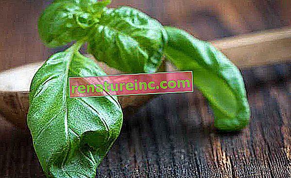 Basilicumthee en andere recepten om van de voordelen te genieten