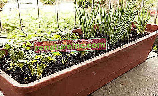 Курс за органична градина №6: как да направите градината си в саксии