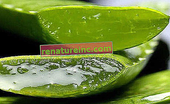 Aloe vera: bienfaits de l'aloe vera, comment l'utiliser et à quoi ça sert