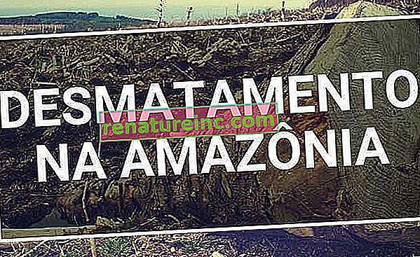 Skovrydning i Amazonas: årsager og hvordan man bekæmper det
