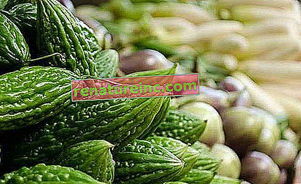 Caetano melon: plante har farmaceutisk potentiale