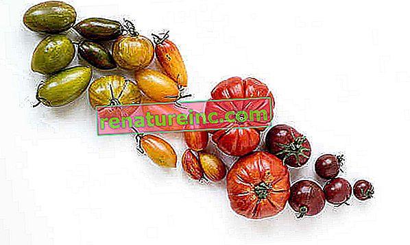 De utrolige fordelene med tomater