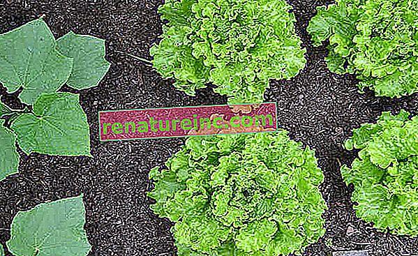 Как да направите зеленчукова градина във вашата градина