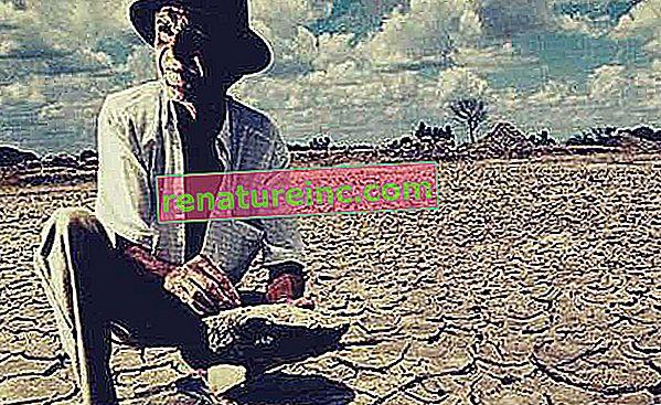 ¿Qué es la desertificación del suelo?