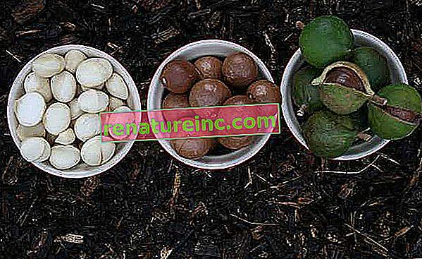 L'huile de macadamia est saine et efficace pour traiter les boucles