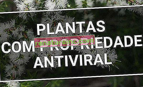 Deväť rastlín s antivírusovými vlastnosťami