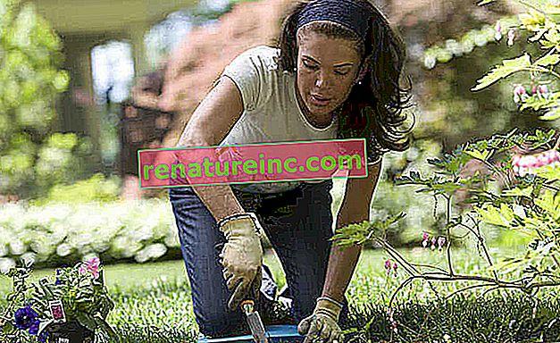 13 съвета за градинарство, за да помогнете на вашите растения