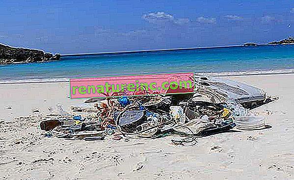 Každý rok ide do oceánov 25 miliónov ton odpadu