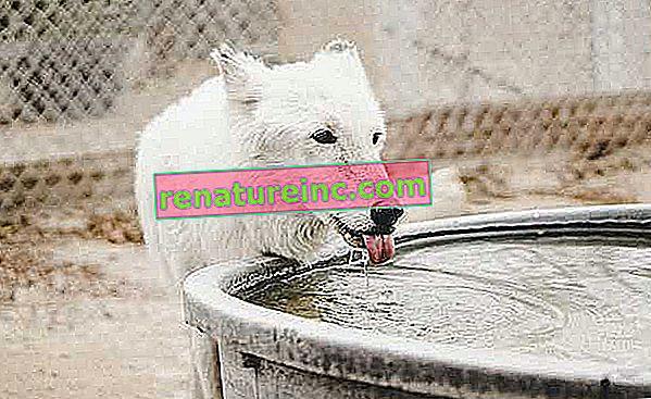 Kan drikkevand drikkes?