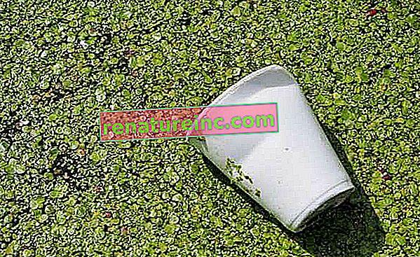 Bioplast: typer af biopolymerer og applikationer