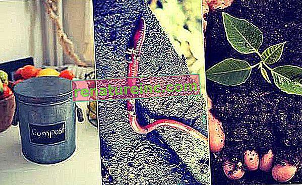 Kako ustvariti kompost kalifornijskih deževnikov
