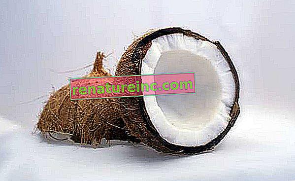 Как да хидратираме с кокосово масло?