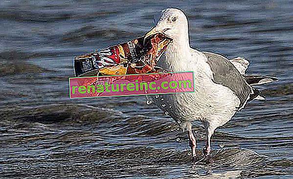 Разберете въздействието върху околната среда на пластмасовите отпадъци за хранителната верига