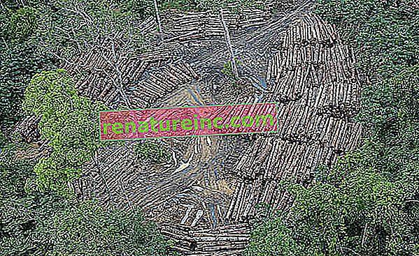 Kaj je krčenje gozdov?