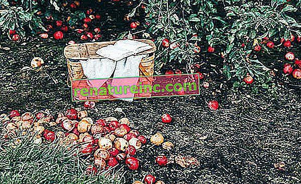 Odpadki hrane: gospodarski in okoljski vzroki in izgube