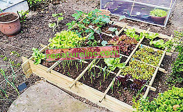 Haga un huerto de verduras y hierbas utilizando 1 m² del patio trasero de su casa