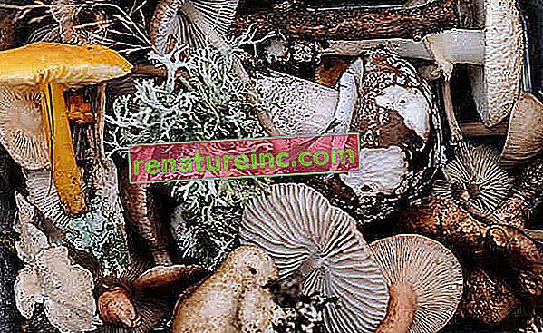 """Cuda grzybów: grzybnia może """"uratować świat"""" w sześciu punktach"""