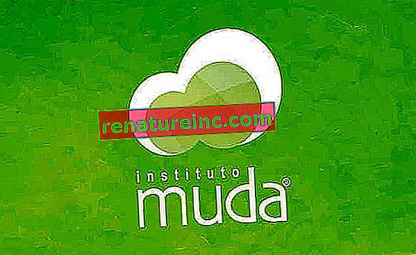Instituto Muda: селективно събиране в компании и кооперации