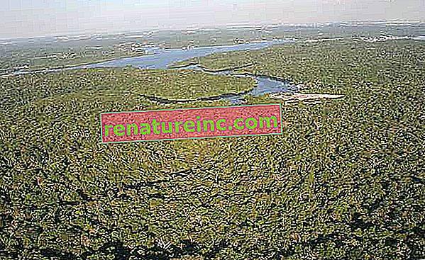Amazonski dan: 5. september je za razmislek